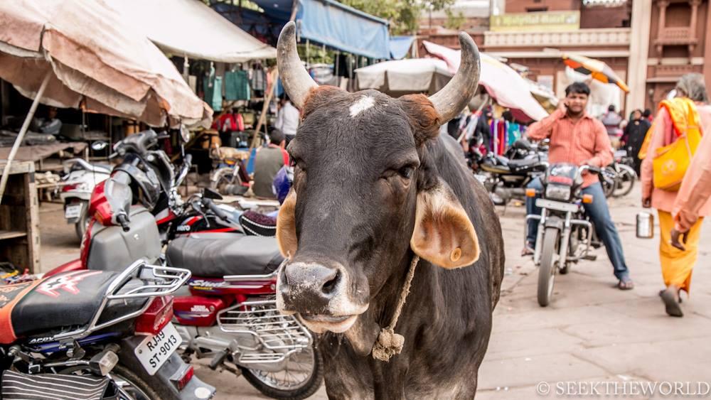 Jodhpur_18
