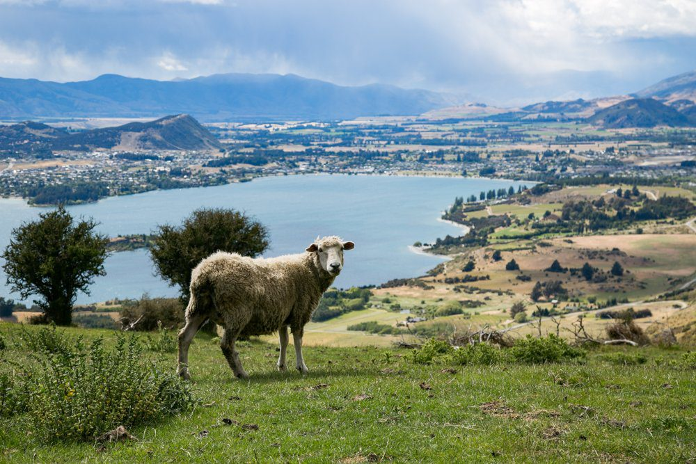 5 Reasons Why You Should Visit Lake Wanaka